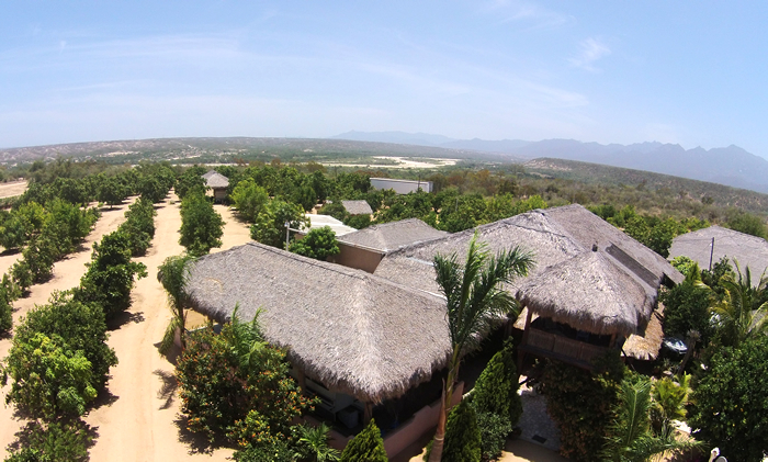 News | Investors | Organic Mango Ranch For Sale Outside Los Cabos